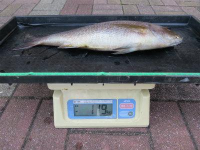 H30.5.14 1.19kg (3)